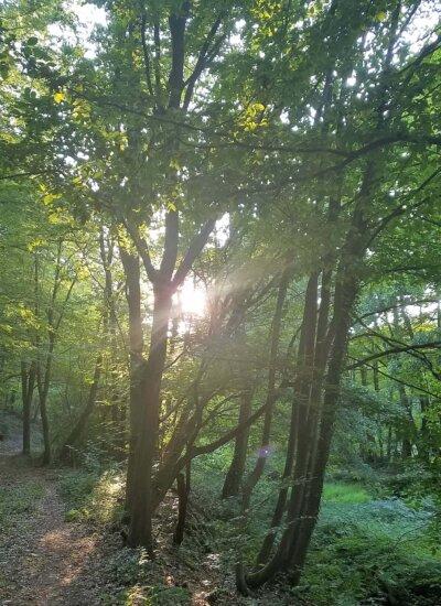 Lichtstrahl zwischen Bäumen